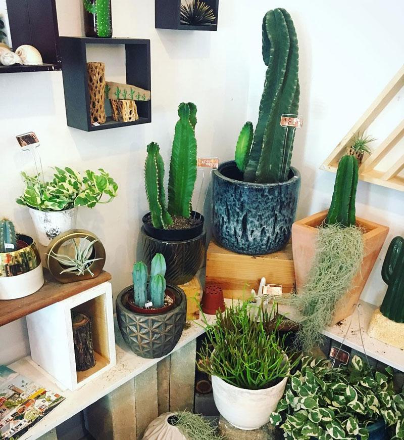 Succulent-Native